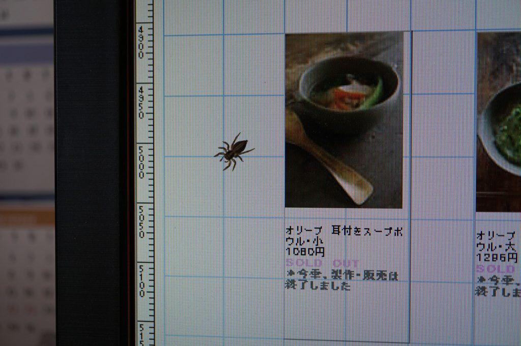 今日は熱心にパソコン作業です。そこへ一匹のクモが。ク...