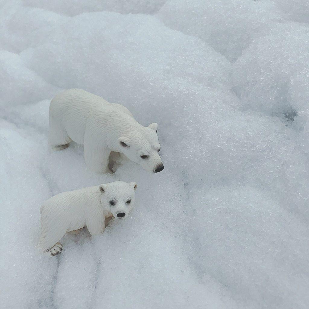 今日の益子は朝から雪!私の可愛いシロクマたちを、サク...
