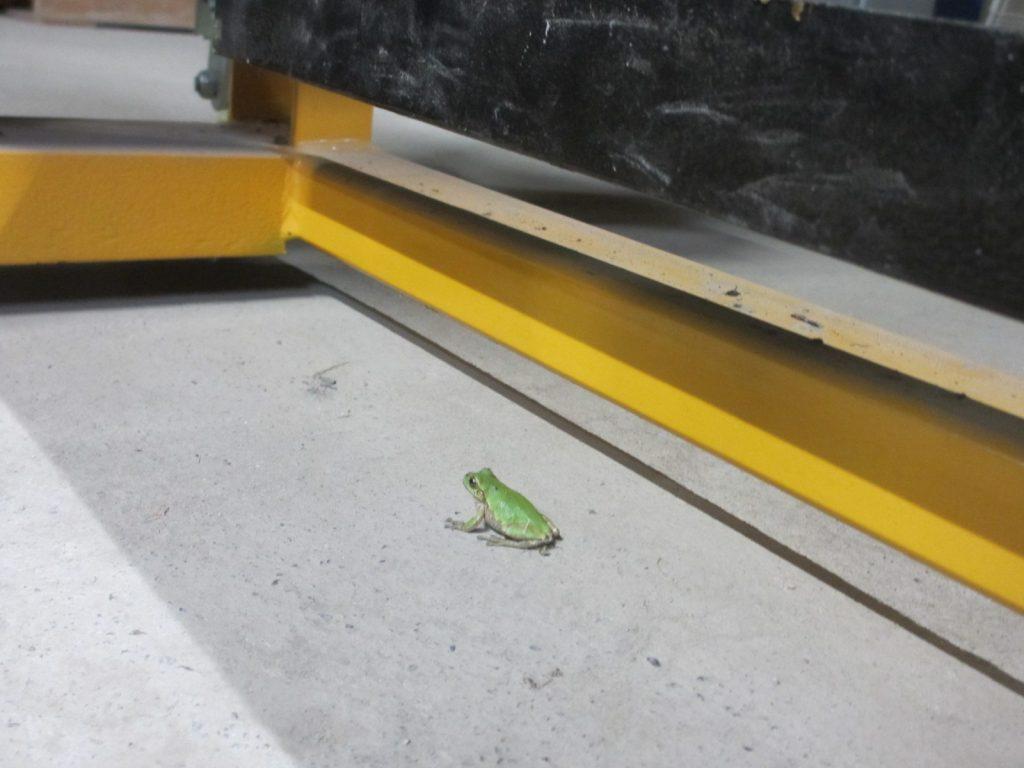 緑の小さなお客様